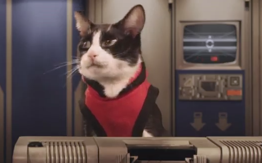 Cat Video: Cats In Space